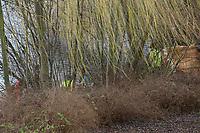 Mannheim. 28.01.18   <br /> Vogelstang. Unterer Vogelstangsee. Im n&ouml;rdlichen Uferbereich des Sees ist eine Leiche gefunden worden. Die Kriminalpolizei und Einsatzkr&auml;fte der DLRG bergen den Leichnam und decken diesen mit Folie ab.<br /> Eine Leiche ist am Sonntag am Mannheimer Vogelstangsee gefunden worden. Das hat die Polizei auf Anfrage best&auml;tigt. Einsatzkr&auml;fte sind zurzeit vor Ort<br /> Bild: Markus Prosswitz 28JAN18 / masterpress (Bild ist honorarpflichtig - No Model Release!) <br /> BILD- ID 06963  