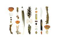 Green Crabs (Carcinus maenas), plastic sewage treatment disk, acorns (Quercus sp.), driftwood, lobster-claw bands, Waved Whelk (Buccinum undatum), fishing rope, feathers, White Pine cone (Pinus strobus), Soft-shell Clam (Mya arenaria), Dog Whelk (Nucella lapillus), plastic shotgun shell, Coralline (not sure of species), peach pit (Prunus persica), sea brick, Common Slipper Shell (Crepidula fornicata).