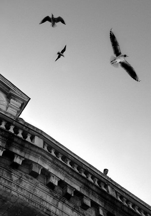 """Black and white photography.Three birds flying over bridge in Venice Italy by Karl R Lilliendahl.This photo is available as open edition and limited edition giclee print in four sizes. Click on """"Get Print"""" to see more details."""