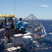 A shark cage for viewing the sharks is lowered into the water.  Surfit and skipper  Boyd McGregor offer a unique experience snorkeling with sharks out of Gisborne on the North Island. The shark cage floats on the surface enabling swimmers to enter the cage and be able to stand chest deep in the water.. Snorkelling with Sharks, Surfit Shark Cage Experience., Gisborne, New Zealand. 15th January 2010 Photo Tim Clayton.