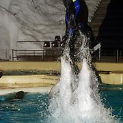 CD presentatie Frans Bauer, dolfijnen sprong trainer water