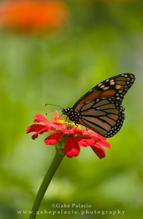 Butterfly on flower in the cutting garden
