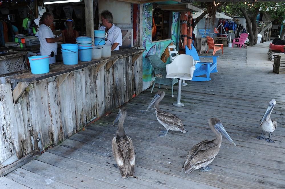 Pelikane vor dem Hungry Tarpon, Long Key..Florida 2009..Foto © Stefan Falke.