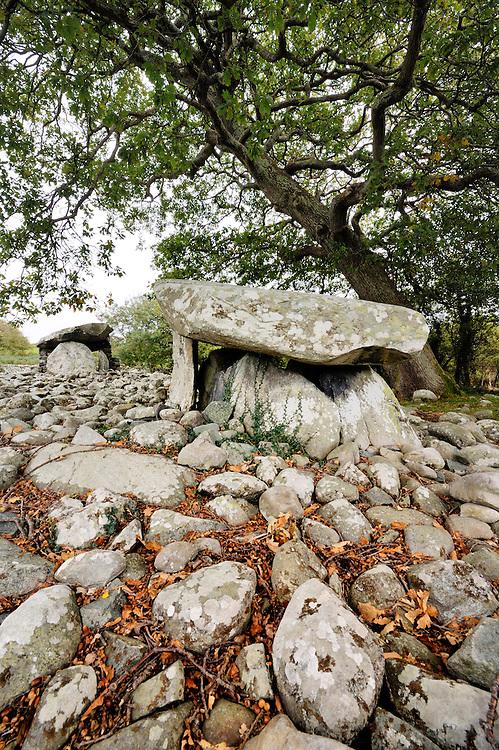 Dyffryn Ardudwy 6000 year old prehistoric megalithic dolmen tomb. Two burial chambers in long barrow cairn. Gwynedd, Wales, UK