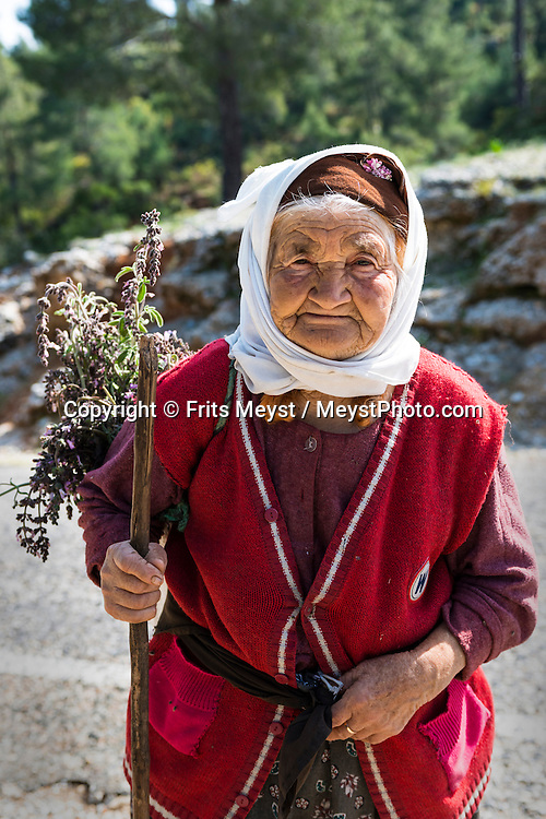 Ceramic Gulf, Turkey, March 2014. An old woman collects herbs on the Carian Trail section from Turnali via Sarnic to Akbuk. The Carian Trail runs through pine scented forests along the coastal mountains of Western Turkey and is littered with ancient ruins, secluded coves with turquoise waters and little villages. more than 800km of ancient roads, shepherd paths and forest trails form Turkey's longest hiking trail.  Photo by Frits Meyst / MeystPhoto.com