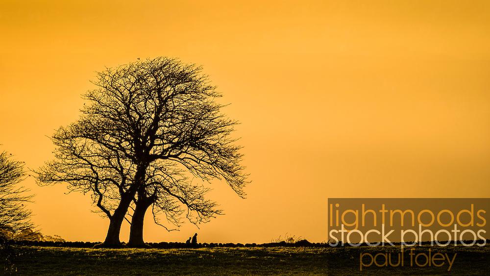 Bare winter trees against an orange sunset sky, Saddleback Mountain, Kiama, NSW, Australia.