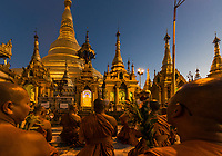 YANGON, MYANMAR - DECEMBER 16, 2016 : monks praying at Shwedagon Pagoda Yangon (Rangoon) in Myanmar (Burma)