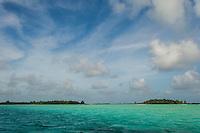 Sea grass medows in the St Joseph Atoll Lagoon, D'Arros Island and St Joseph Atoll, Amirantees, Seychelles,