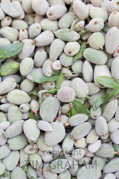 Fresh almonds, Cagla Badem, on sale in food market in Kadikoy district on Asian side of Istanbul, East Turkey