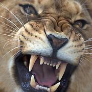 Orana Wildlife Park, Christchurch