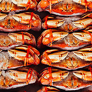 Dungeoness crab for sale at a farmer's market in Seattle, Washington.