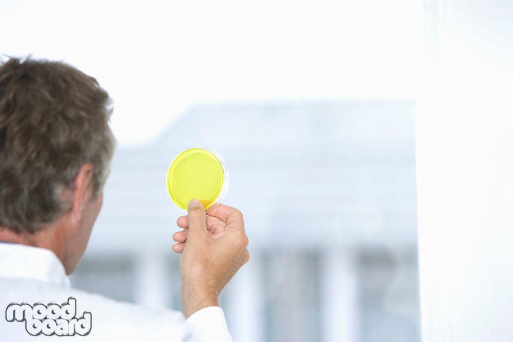 Scientist holding sample in laboratory