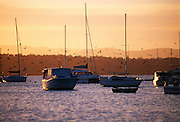 Yachts and birds at sunset, Lake Macquarie, Australia