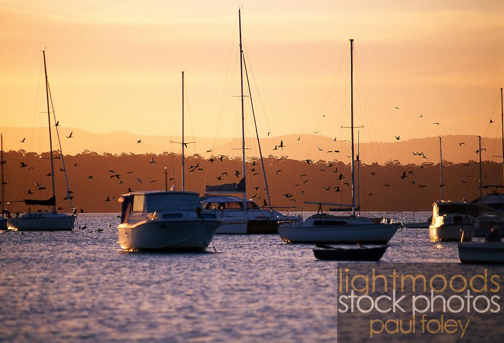 Yachts and birds at sunset, Lake Macquarie, Australia
