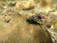 Caddisfly<br />