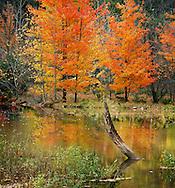 The Pastoral Beauty Of Caesar Creek In Autumn, Southwestern Ohio, USA