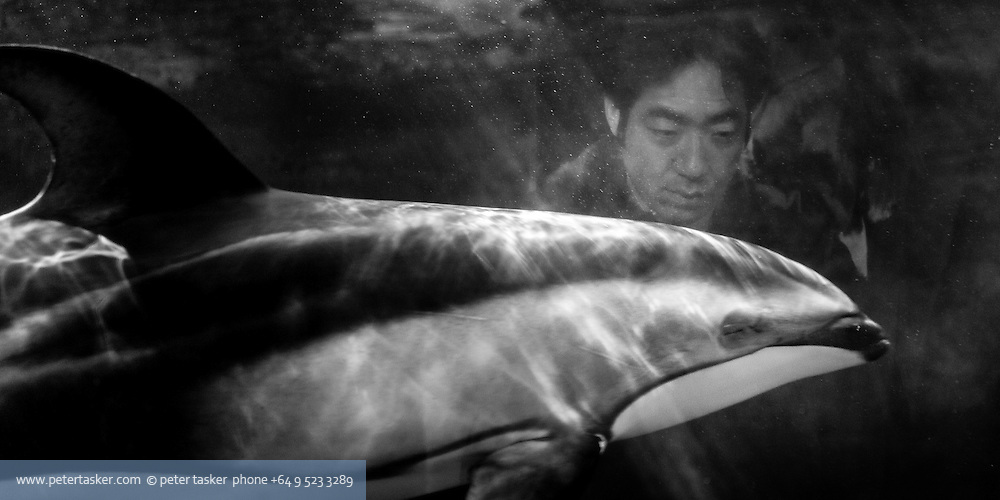 Osaka aquarium. Black and white photo looking through the aquarium at man watching a dolphin swimming by.