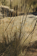 Gardner Canyon, Santa Rita Mountains, Coronado National Forest, Sonoita, Arizona, USA.
