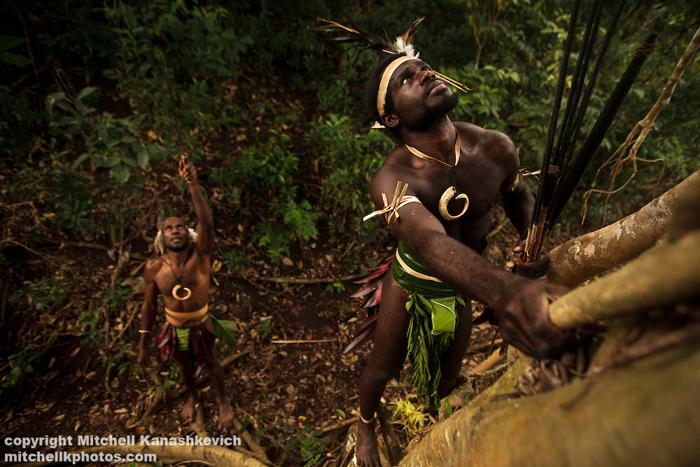 Traditional Ni Vanuatu men hunting flying foxes and birds which live in a banyan tree
