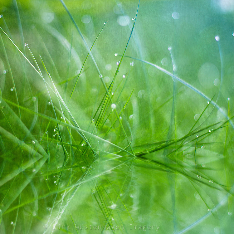 Fresh grass in morning light with dew drops.