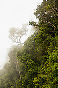 Mist in the forest. Kaeng Krachan National Park. Thailand.