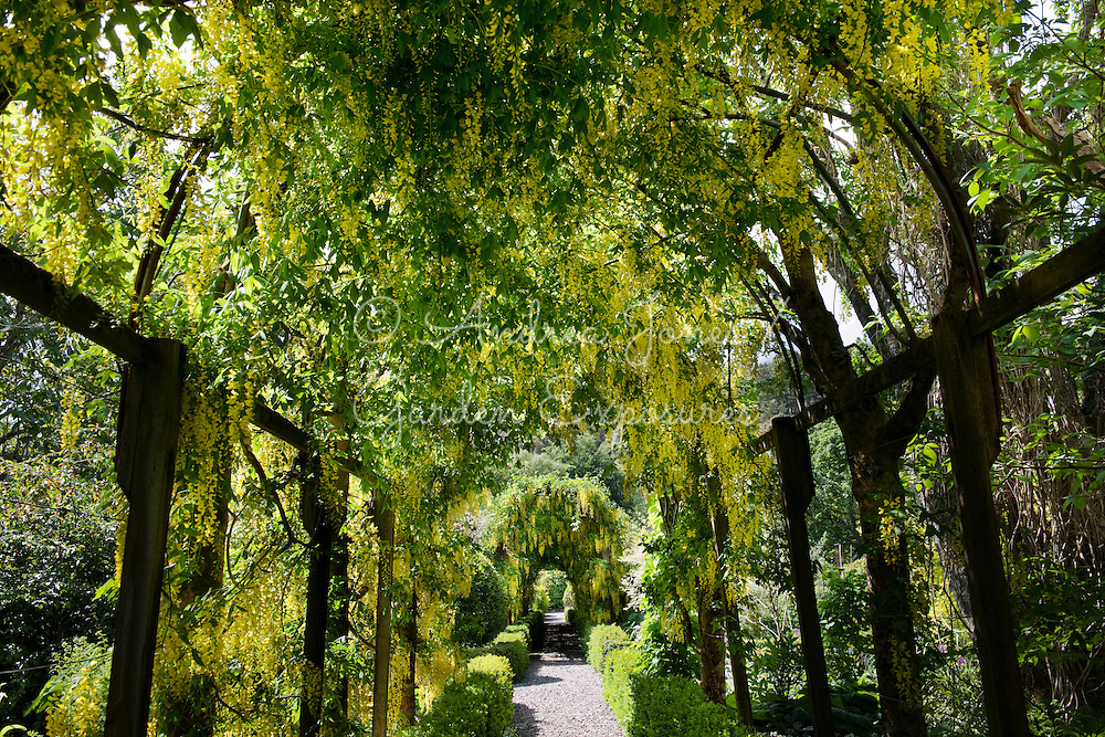 The Laburnum Tunnel at Dundonnell House &amp; Garden, Wester Ross, Scotland<br /> <br /> photography &copy; Andrea Jones/courtesy Lady Rice