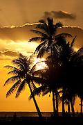 Palm trees silhouetted against the setting sun, Waikiki, Hawaii