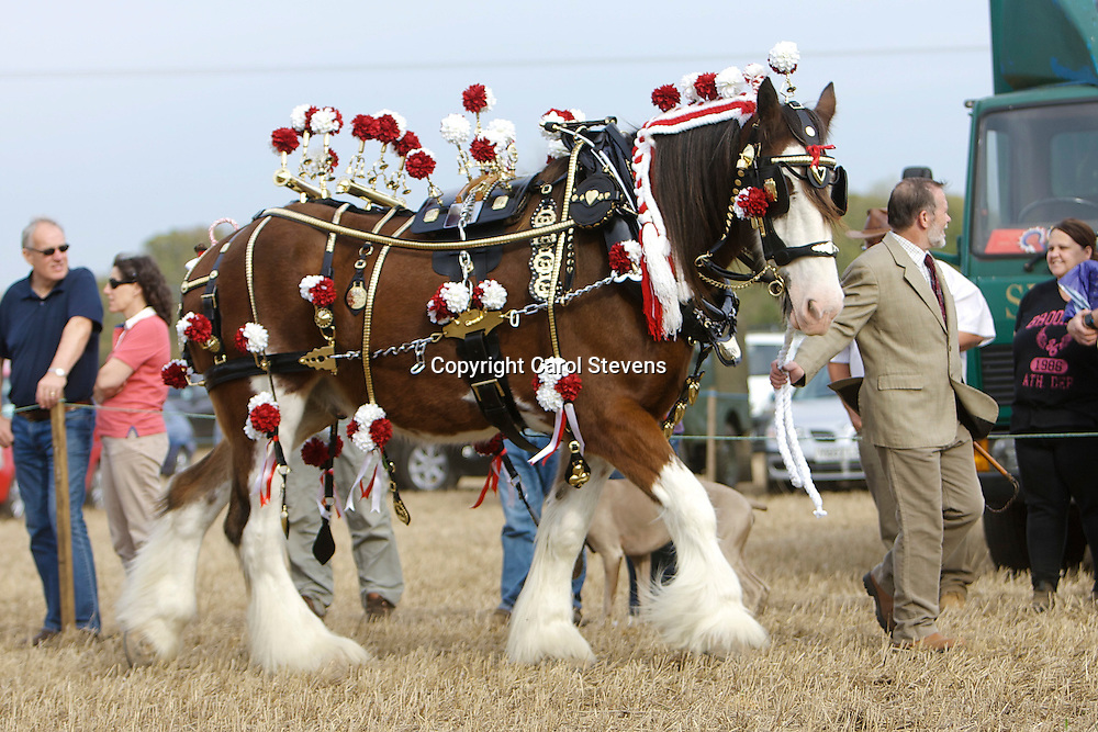 Northern Heavy Horse Society Annual Ploughing Match 2011 Decorated Horse Class<br /> Mrs J Joyce's Titan