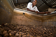 Farm worker Thomas Kavi leans against a large bin used to store dried jatropha fruits at the farm where he works in the town of Lolito, roughly 80km east of Ghana's capital Accra, on Thursday Dec. 12, 2006. Jatropha - which grows naturally in Ghana and other parts of Africa - can be used to make biodiesel.<br />
