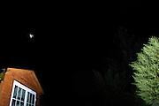 UK - Sunday, Aug 24 2008:  Bat in the garden. (Photo by Peter Horrell / http://www.peterhorrell.com)