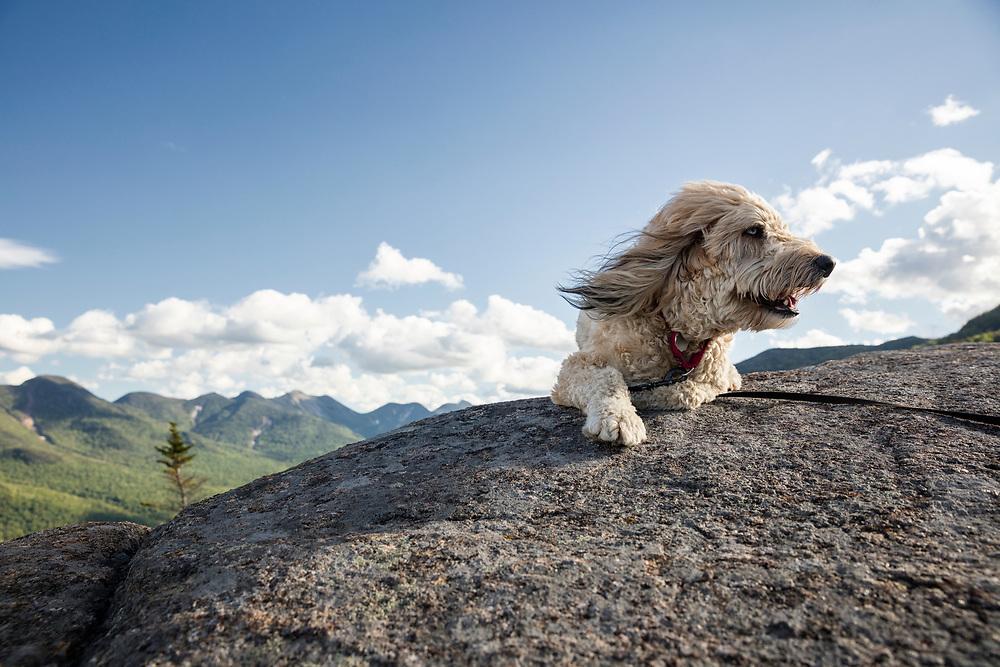 fluffy mutt on mountain summit