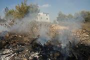 Israel, Haifa Carmel Mountain Raging forest fire near residential area