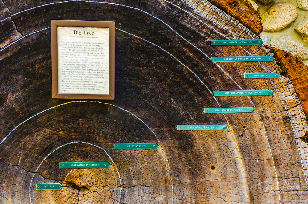 Tree ring display at the Yosemite Museum, Yosemite National Park, California USA