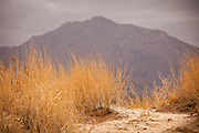 Kelso Dunes in the Mojave Desert in the Mojave National Preserve, Kelso, CA