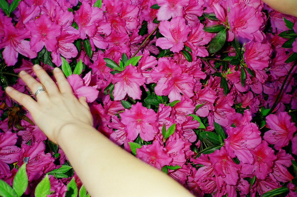 Melissa Eich, 22, reaches out to touch the flowers of an Azalea bush in Norfolk, Virginia on Saturday, April 17, 2010.