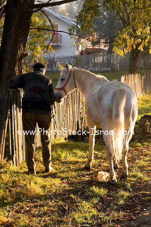 Romania, Transylvania, A farmer and his horse near an old wooden picket fence