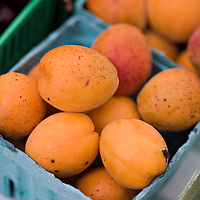 A selection of beautiful, local organic apricots biodynamically grown by Laura Sabourin at her Feast of Fields farm in Ontario.