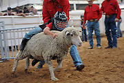Child Sheep Racing<br /> <br /> Mutton busting is an event held at rodeos similar to bull riding or bronc riding, in which children ride or race sheep<br /> In the event, a sheep is held still, either in a small chute or by an adult handler while a child is placed on top in a riding position. Once the child is seated atop the sheep, the sheep is released and usually starts to run in an attempt to get the child off. Often small prizes or ribbons are given out to the children who can stay on the longest. There are no set rules for mutton busting,<br /> The vast majority of children participating in the event fall off in less than 8 seconds. Age, height and weight restrictions on participants generally prevent injuries to the sheep, and implements such as spurs are banned from use. In most cases, children are required to wear helmets and parents are often asked to sign waivers to protect the rodeo from legal action in that event.<br /> <br /> Photo shows: Amarillo, Texas, USA - Kwintyn Camarillo takes his turn mutton bustin' at the Tri-State Fair rodeo in Amarillo, Texas.<br /> ©Exclusivepix