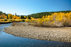 """Little Truckee River in Autumn 4"" - Autumn photograph of yellow cottonwood trees along the Little Truckee River near Stampede Reservoir."