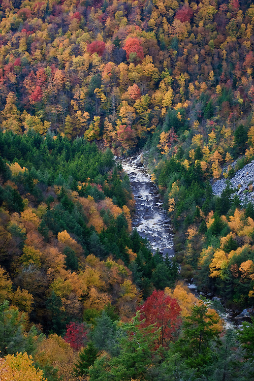 Fall Foliage in the Blackwater River Gorge, Blackwater Falls State Park, WV