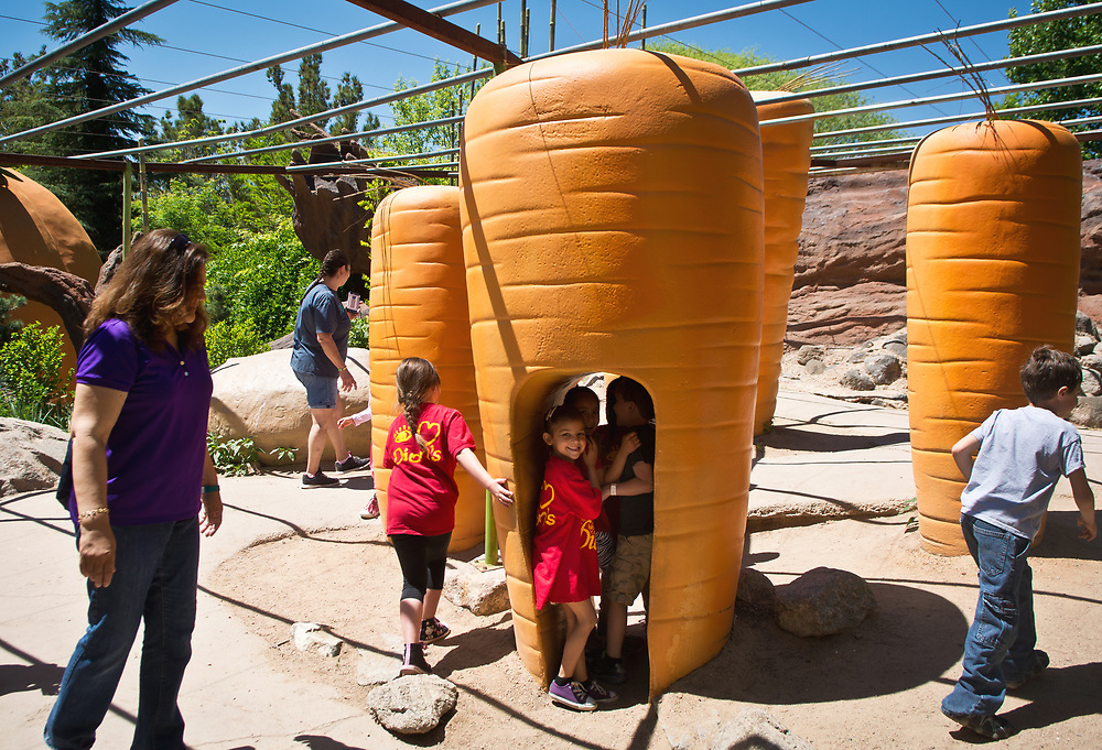 mkb050517e/metro/Marla Brose -- Apache Elementary kindergarten teacher Christina Morrison, front left, checks on her students, including Genesys Velasquez Howe,  inside a giant carrot in the Children's Fantasy Garden at the ABQ BioPark Botanic Garden, Friday, May 5, 2017, in Albuquerque, N.M. The garden, which was full of classes on field trips, celebrated Children's Day Friday. (Marla Brose/Albuquerque Journal)