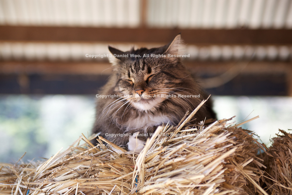Cat resting on top of hay bail.