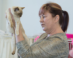 Christchurch 39th Southern Burmese Cat Club Show Images Setford News Photo Agency