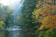 Trees, fall foliage, trees by water