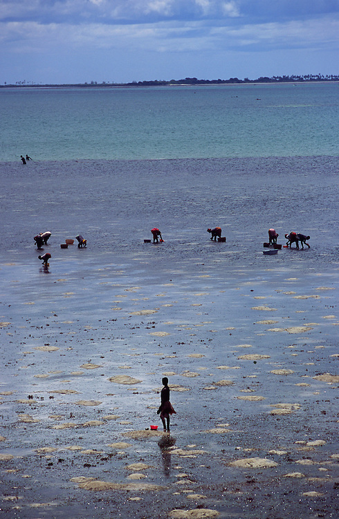 People catching clams and mussels during low tide in Ilha de Mozambique