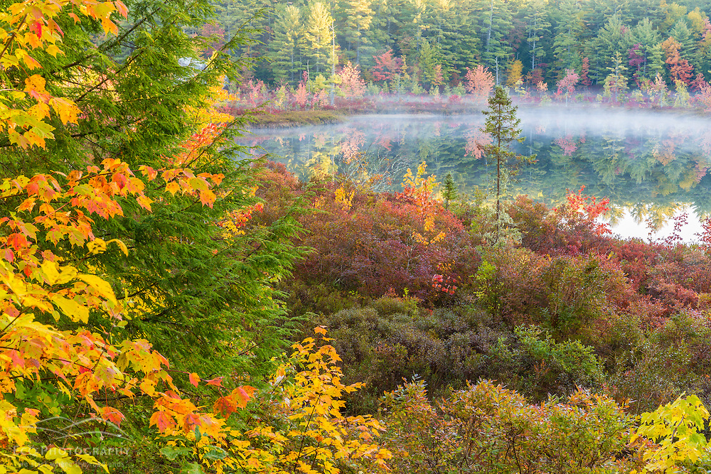 Fall colors in the bog surrounding Round Poind in Barrington, New Hampshire.