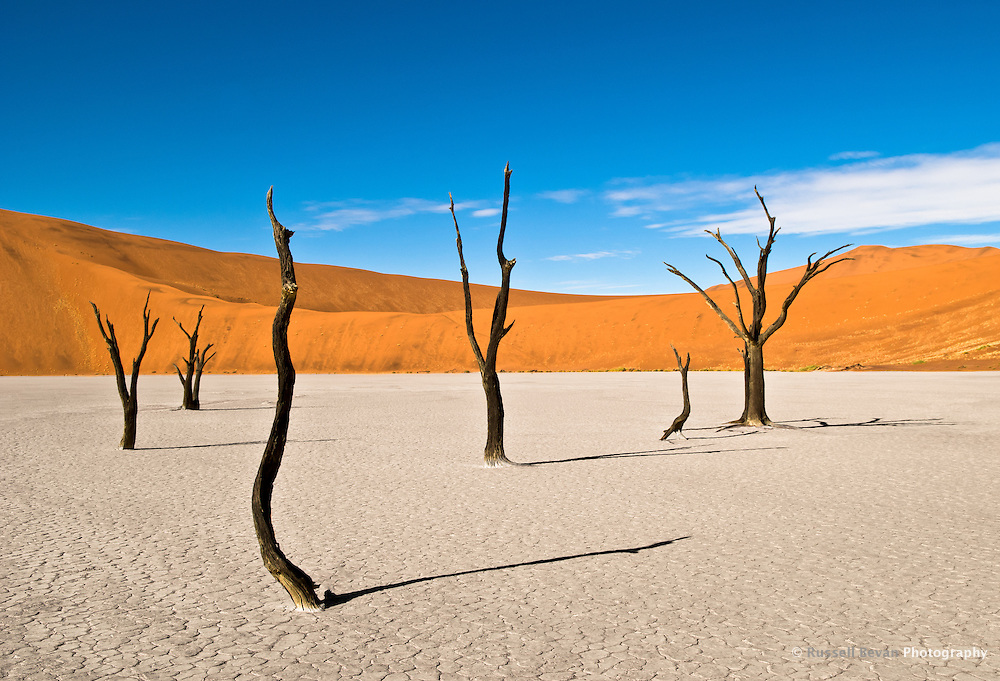 Dead Trees at Dead Vlei, near Sossusvlei, in the Namib-Naukluft National Park, Namib desert, Namibia