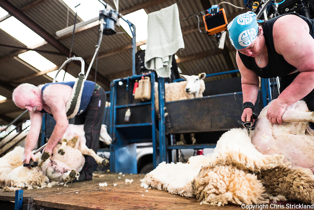 Bonchester Bridge, Hawick, Scottish Borders, UK. 7th July 2016. Sheep shearers at work on a farm near Hawick in the Scottish Borders. Each shearer will shear in the region of 300 sheep a day.