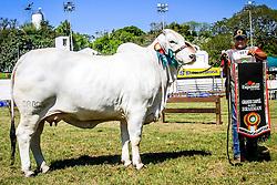 Grande Campeã da raça Brahman durante a 38ª Expointer, que ocorrerá entre 29 de agosto e 06 de setembro de 2015 no Parque de Exposições Assis Brasil, em Esteio. FOTO: Vilmar da Rosa/ Agência Preview