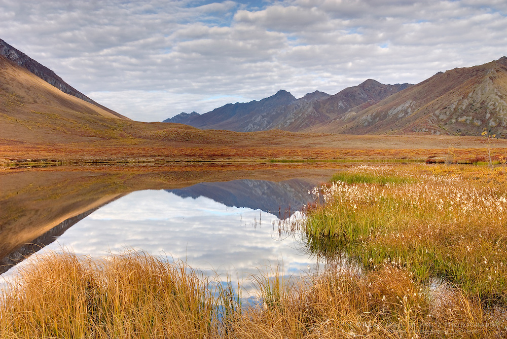 Clouds and mountains reflected in small tundra lake of the Ogilvie Mountains, Tombstone Territorial Park Yukon Canada